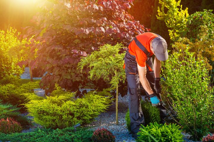 Landscape Contractors in Brampton