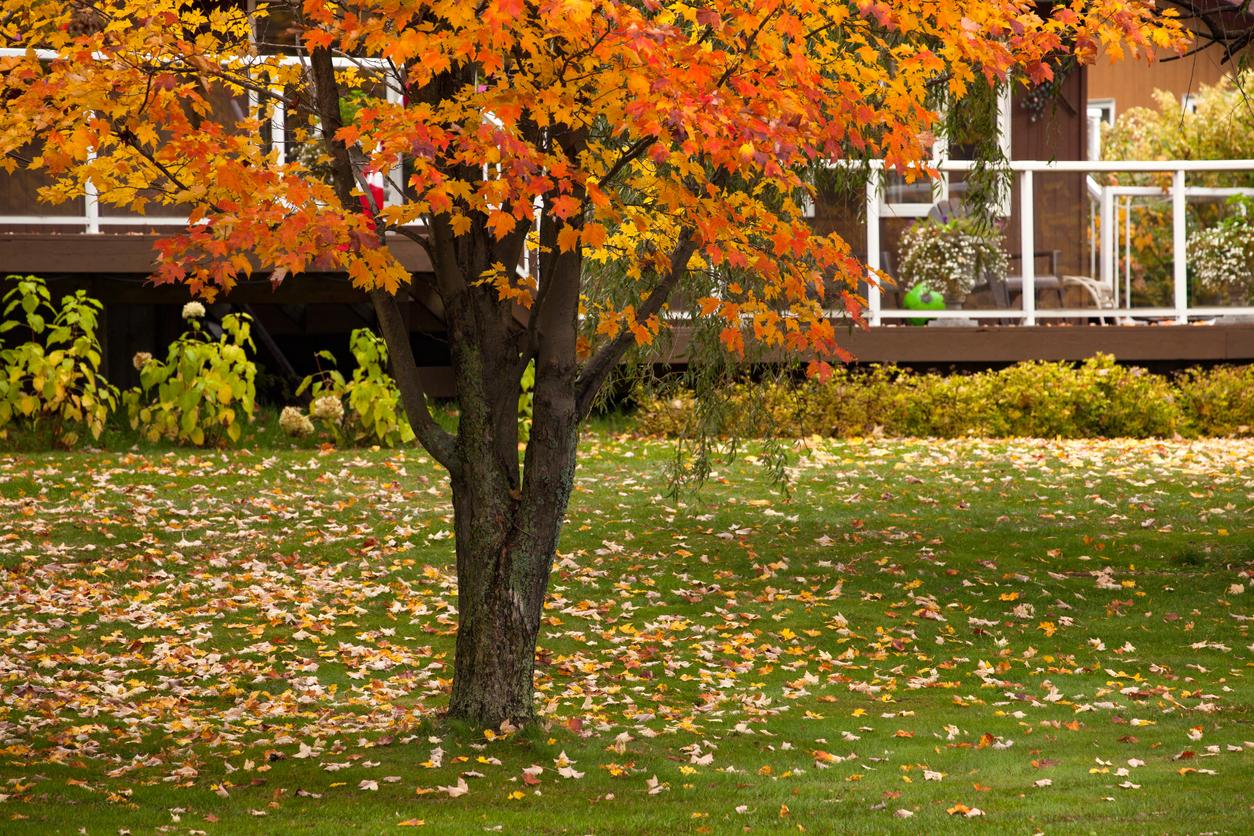 Backyard - Autumn in Canada