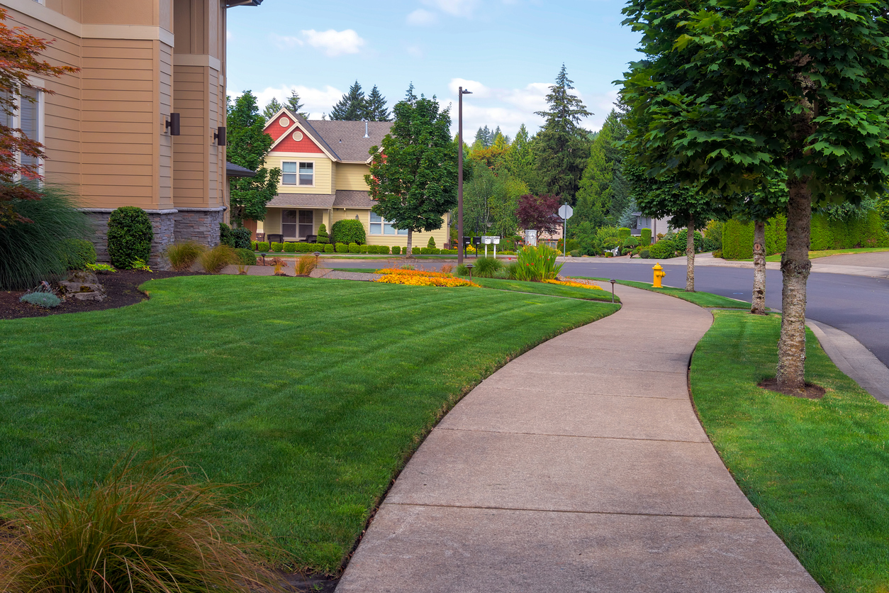 House frontyard and parking strip freshly mowed green grass lawn