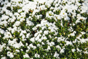 Lawn Care Questions to Ask during the Winter