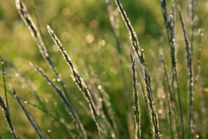 Types of Cool Season Grasses and Tips for Planting Them