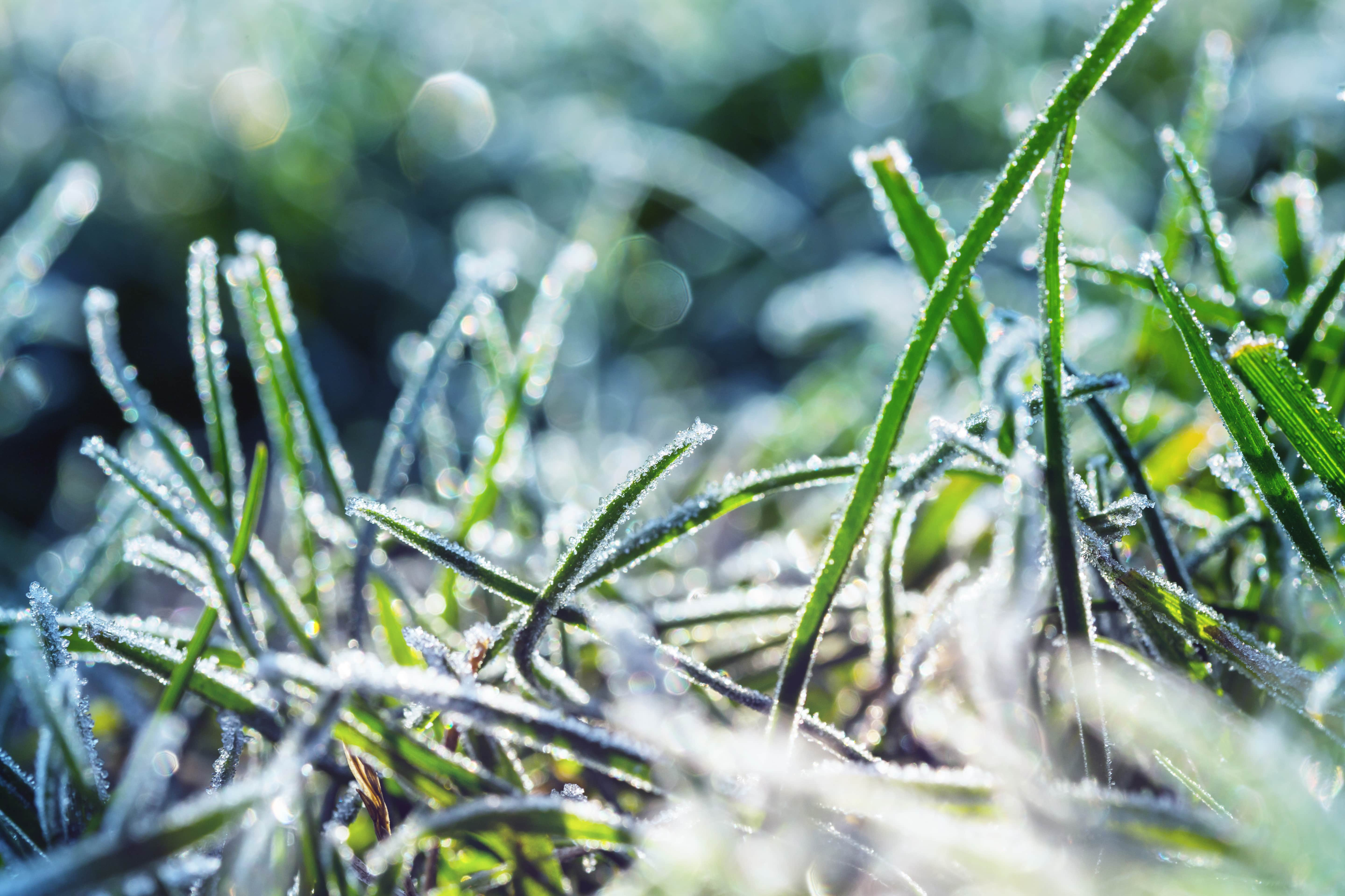 Protect Your Grass Against Cold Weather