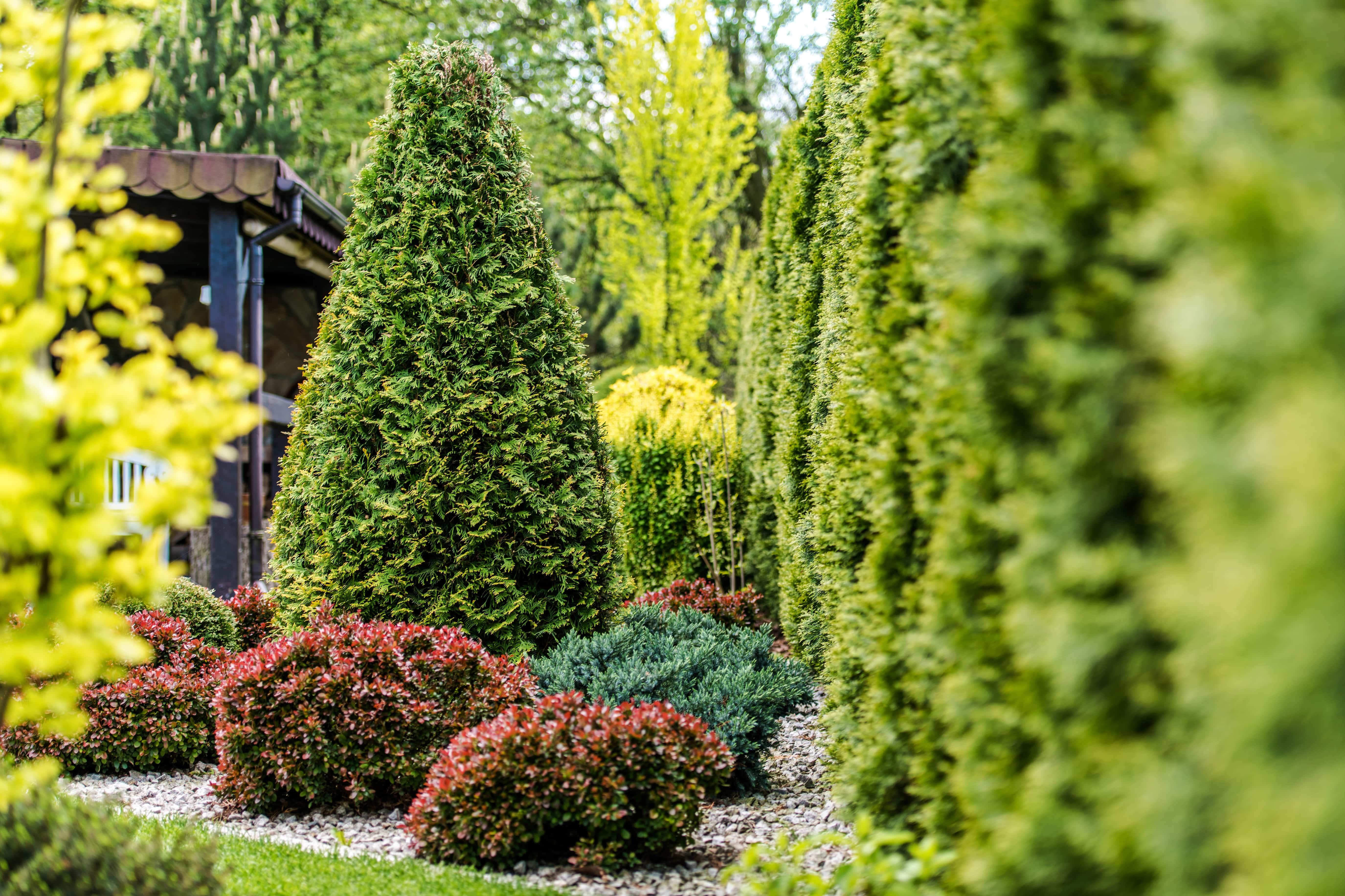 beautiful-backyard-garden