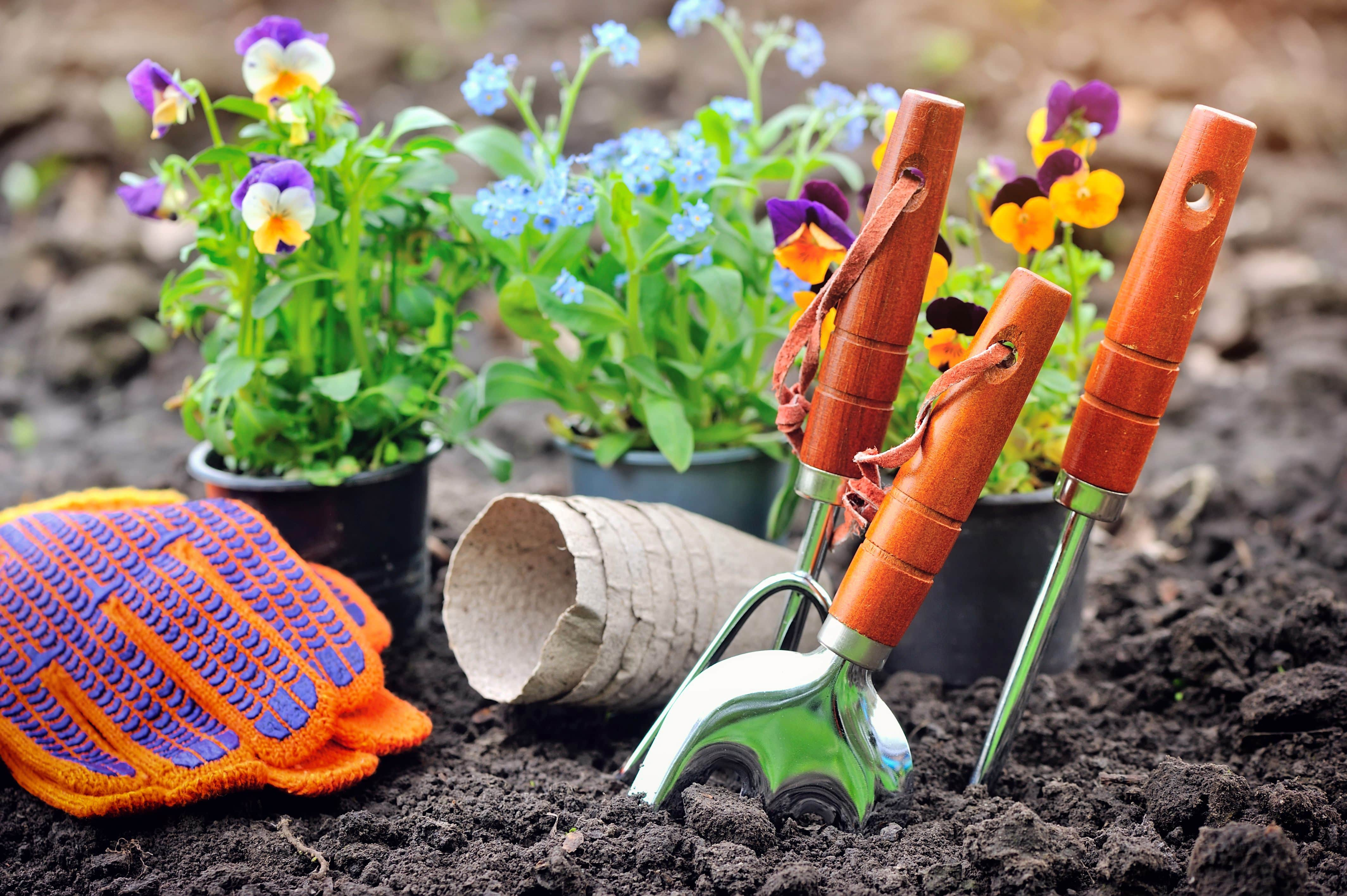 gardening-tools-and-spring-flowers