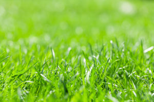Green grass field sunny bokeh background