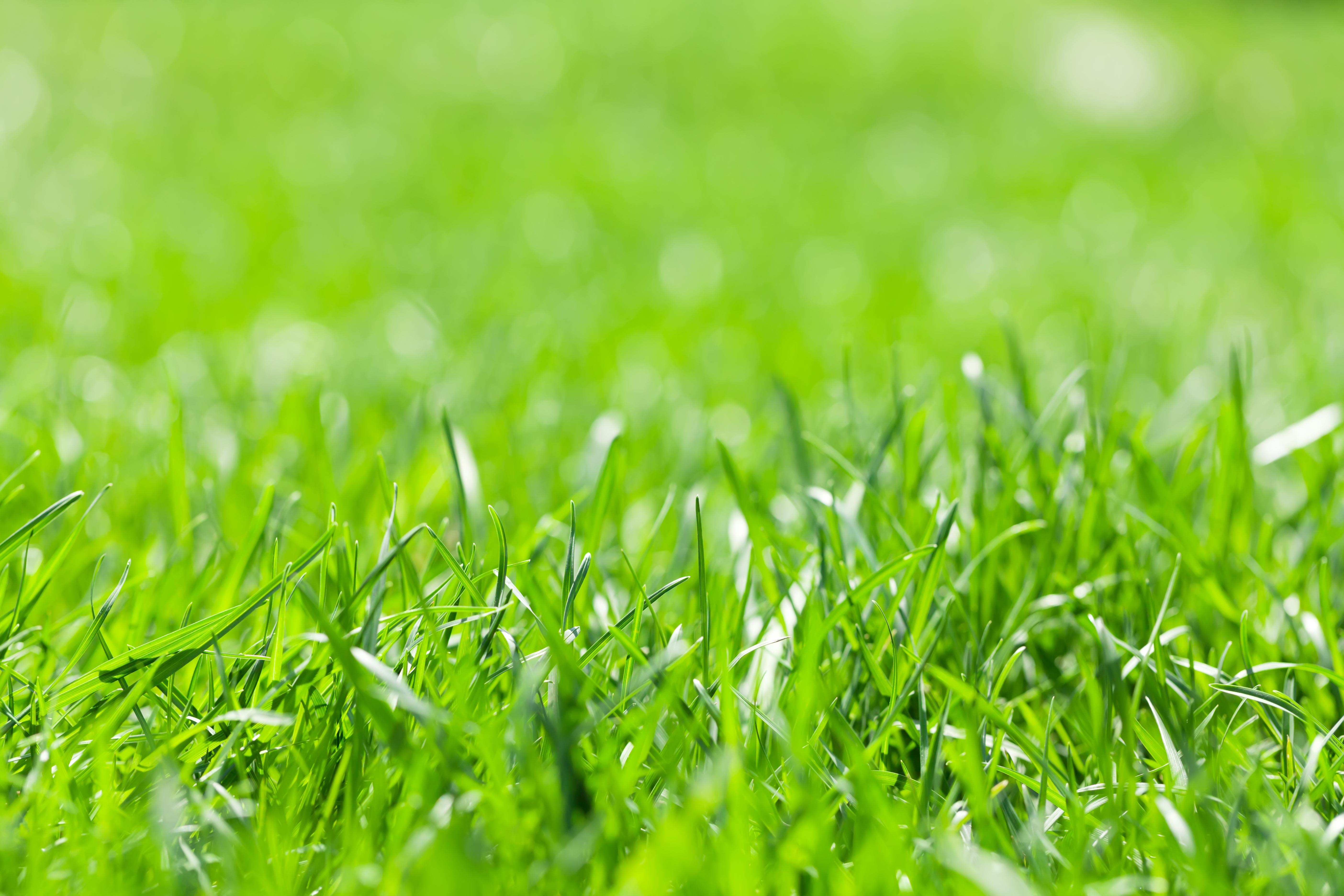 Green grass field sunny bokeh background