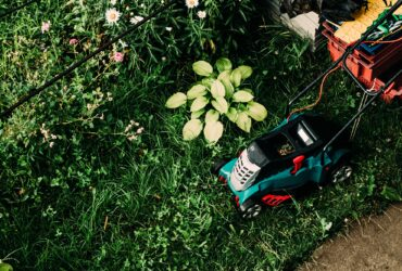 Summer Lawncare Tips for a Greener, Thicker, Healthier Lawn