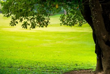 Benefits of Commercial Tree Care and Property Maintenance in Toronto