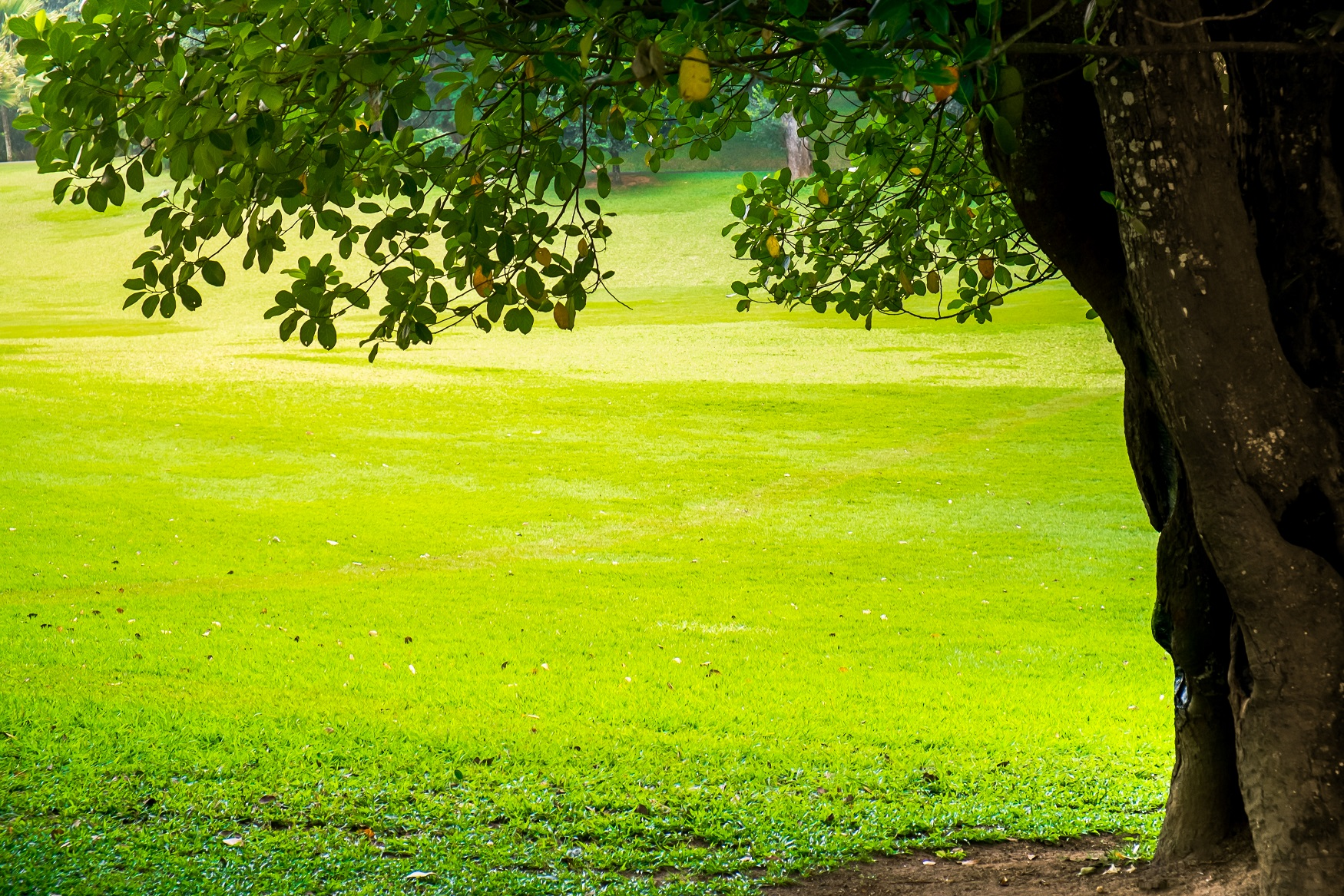 Benefits of Commercial Tree Care
