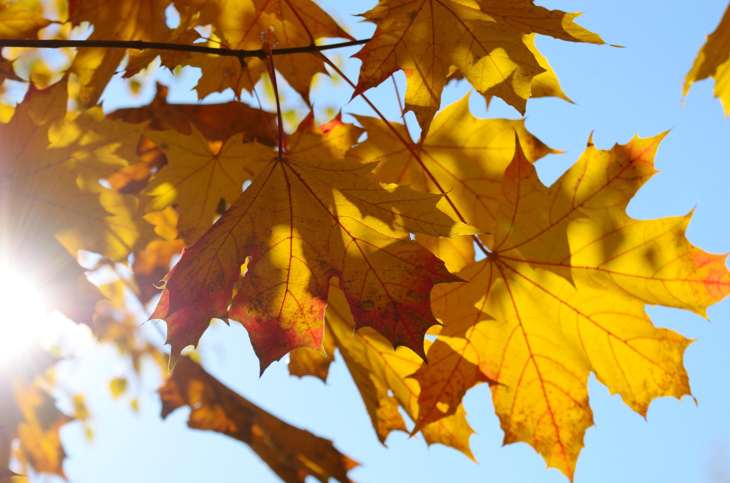Fall Lawncare in Brampton